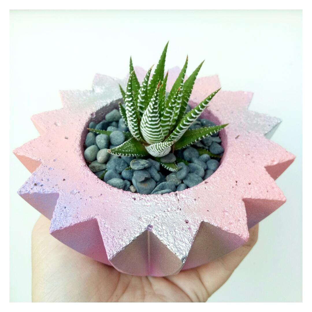 Coral unicorn poop and small deco planter