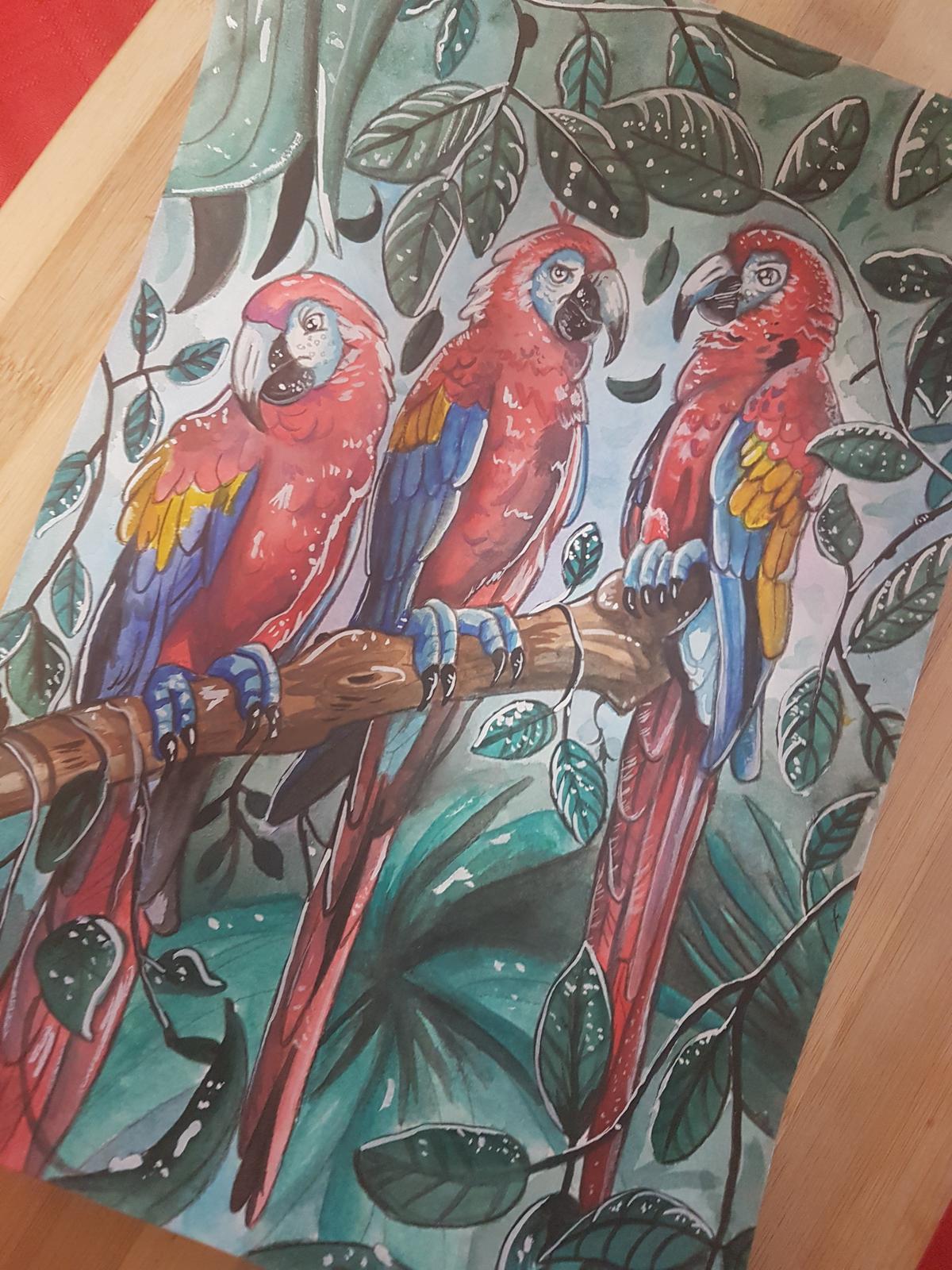 Watercolour - Scarlet Maccaws