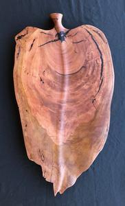 Arid Timber Art