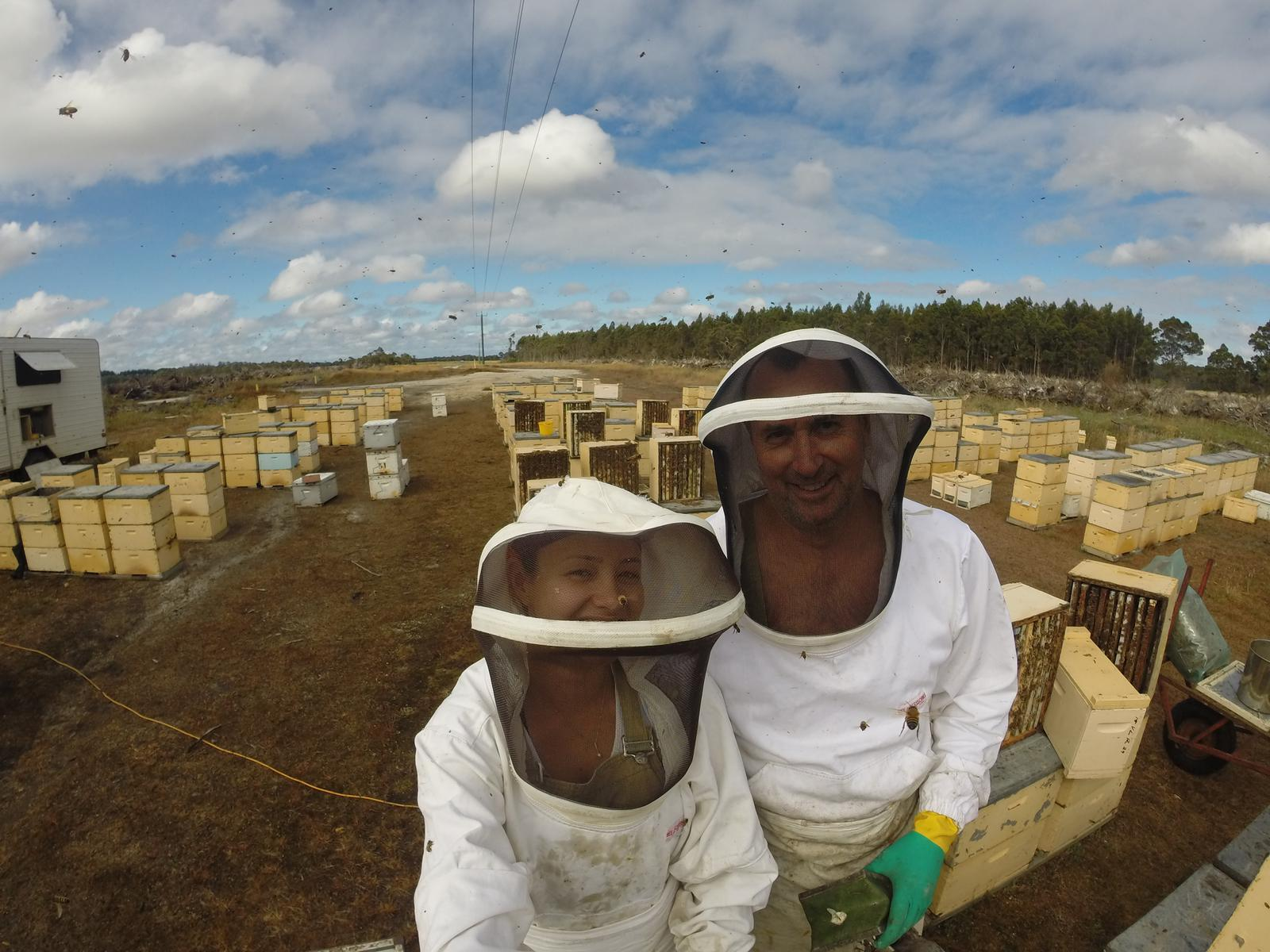 In the Apiary