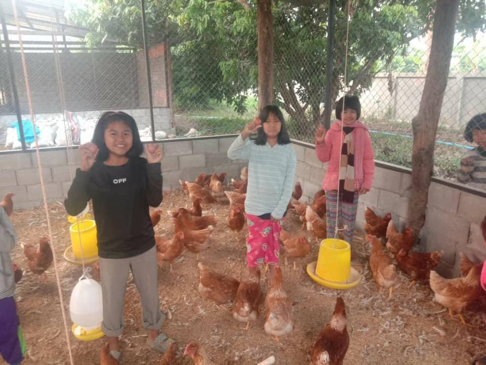 Collecting eggs - a great protein source