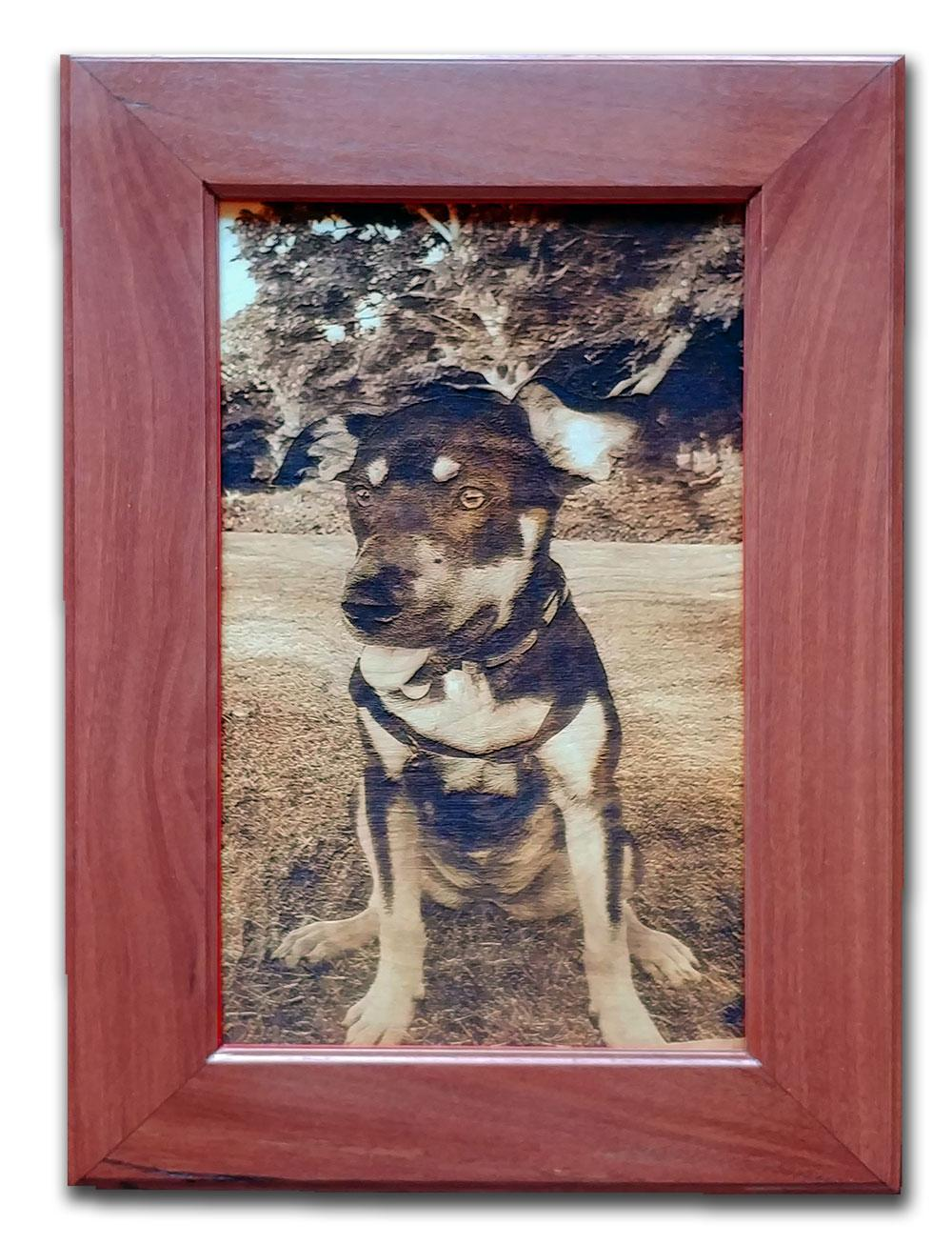 Dog with custom jarrah frame