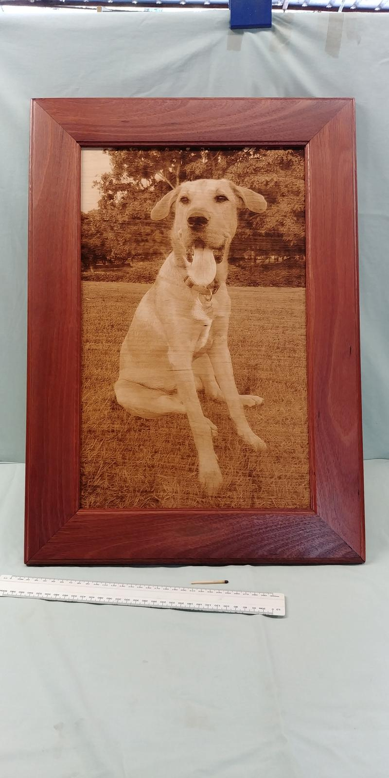 Charlie Boy with jarrah frame