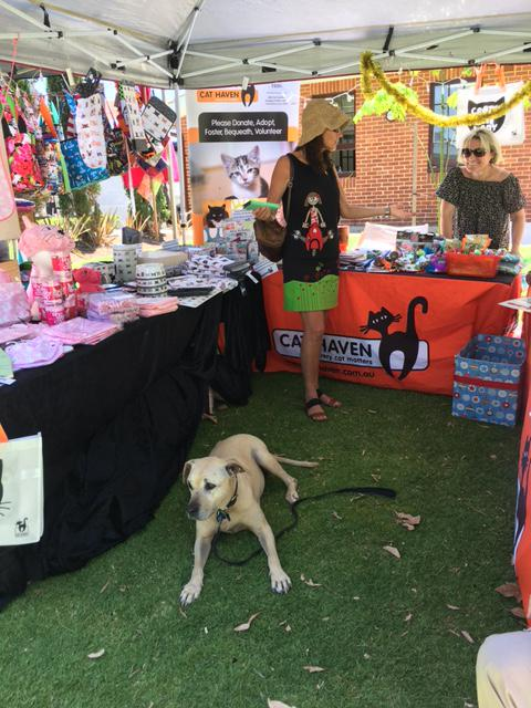 Cat Haven's stall at Perth Makers Market - December 2016