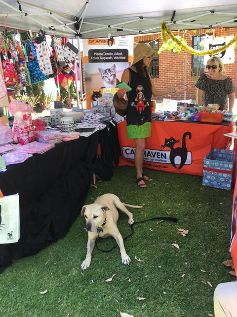 Cat Haven Stall at Perth Makers Market, December 2016