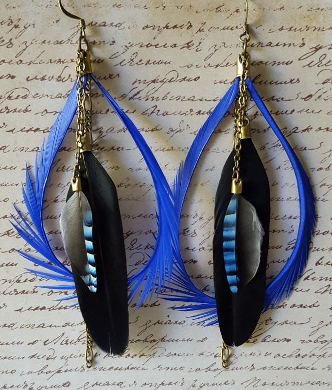 Feathers Bluejay
