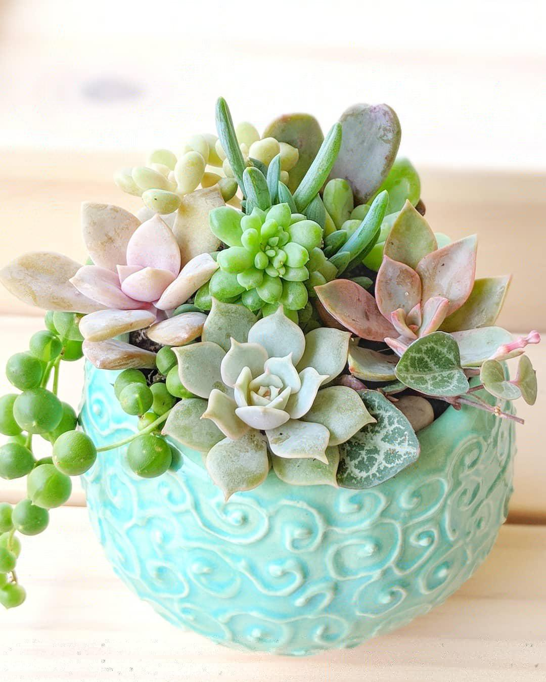 succulent arrangment