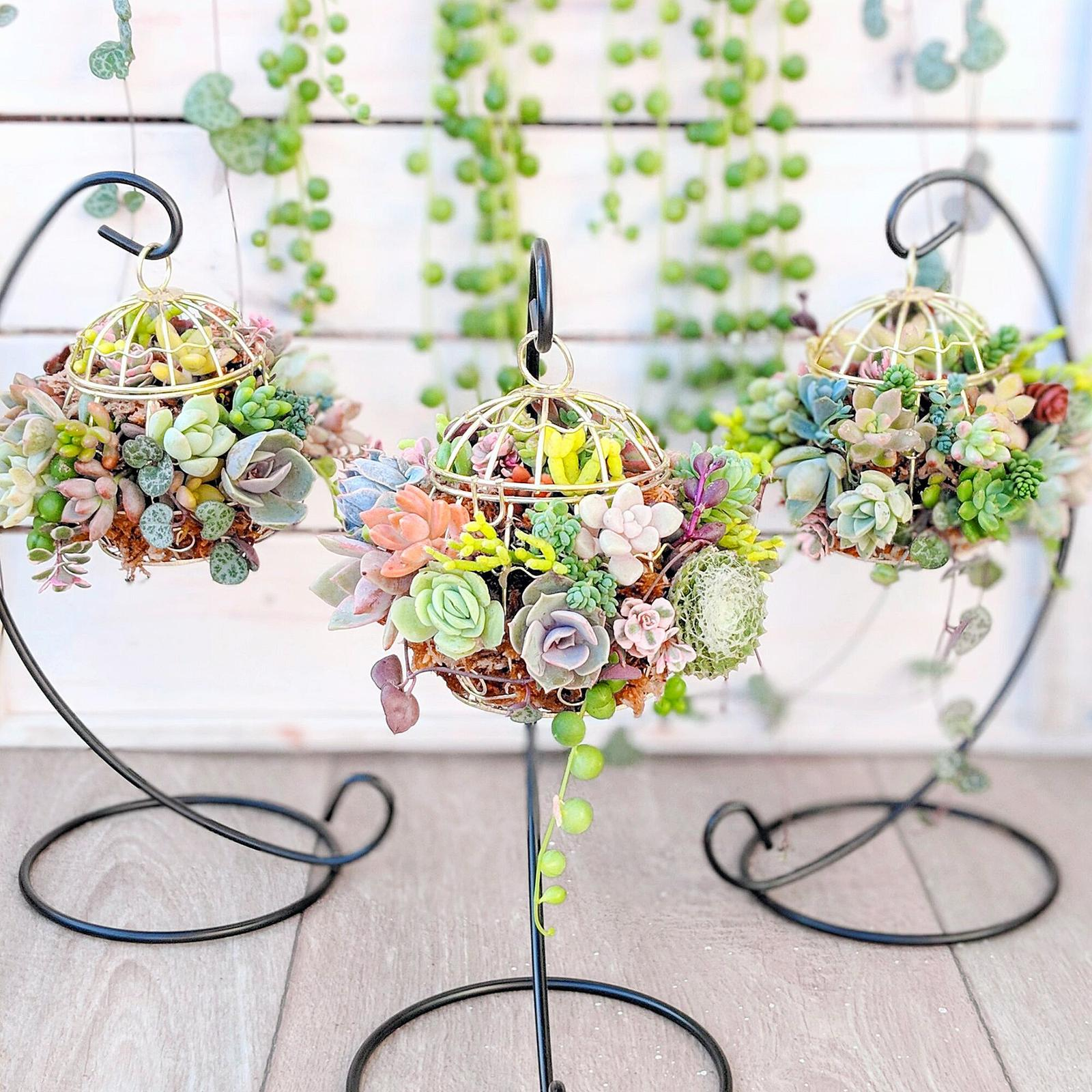 Succulents in mini birdcages