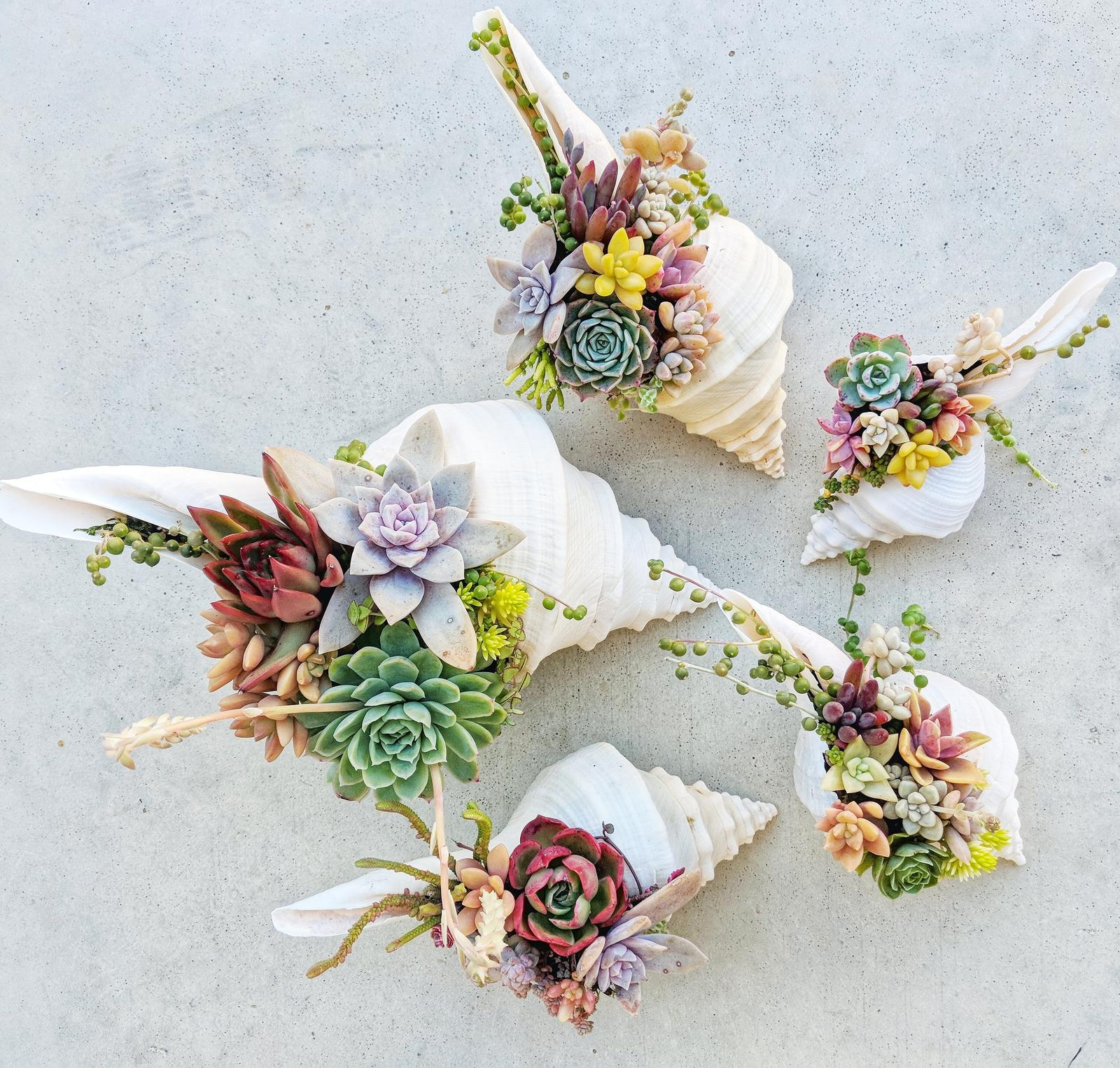 Succulents in seashells