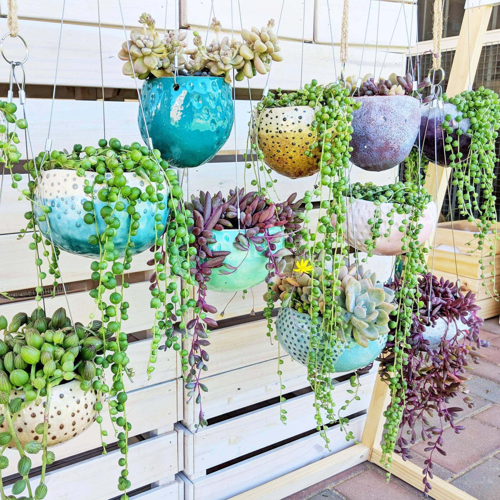 Succulents in handmade hanging planters