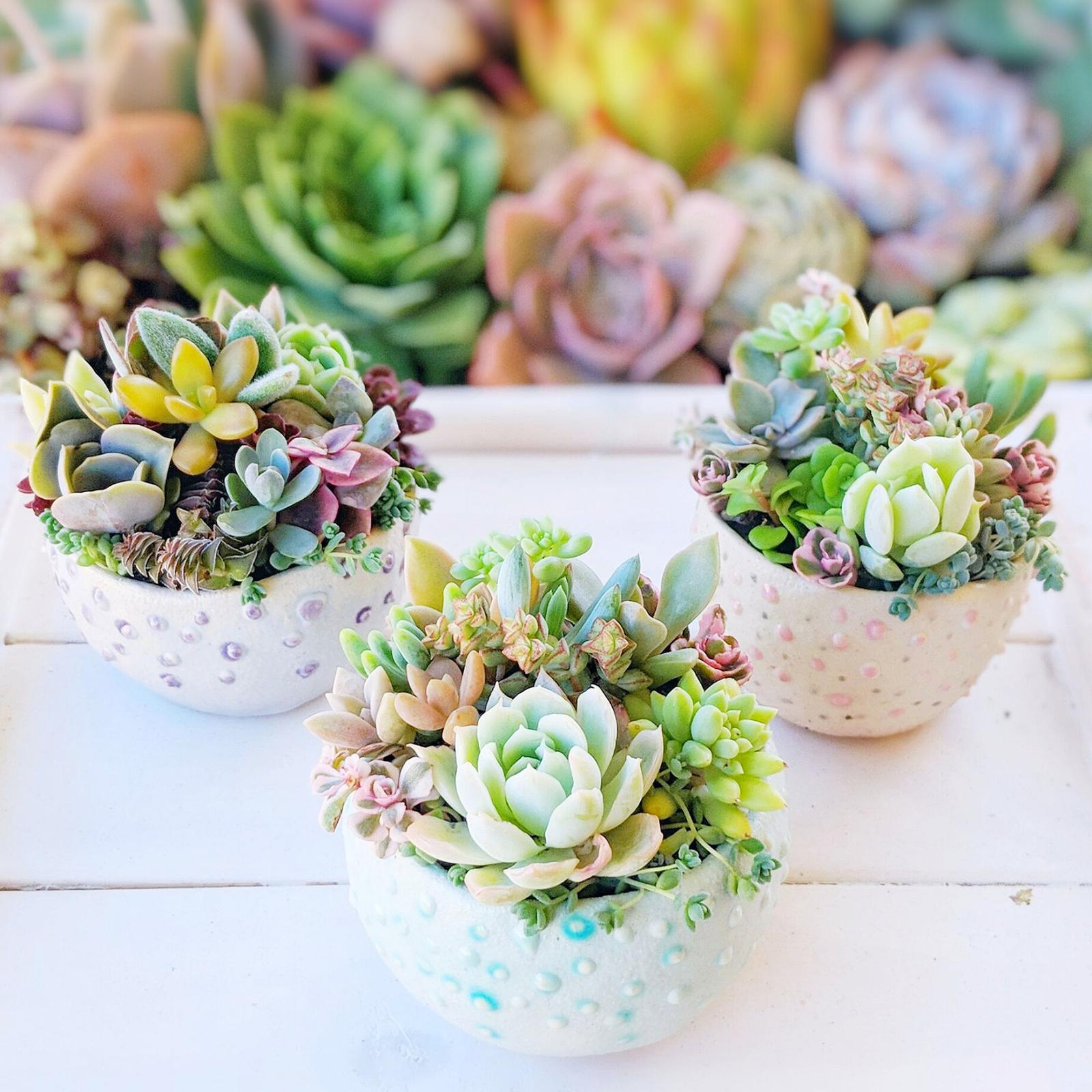 Succulents in handmade pinch pots
