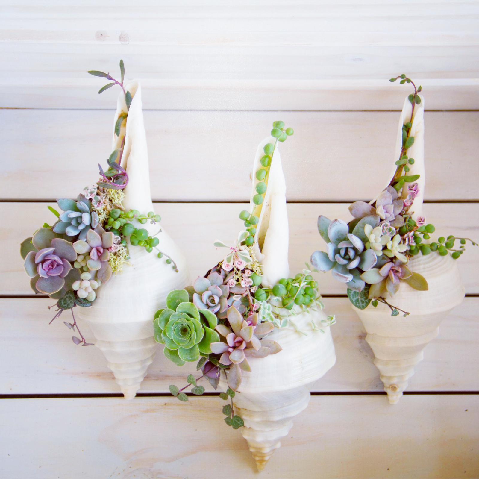 succulents in seashells
