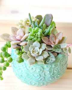 Charming Succulents