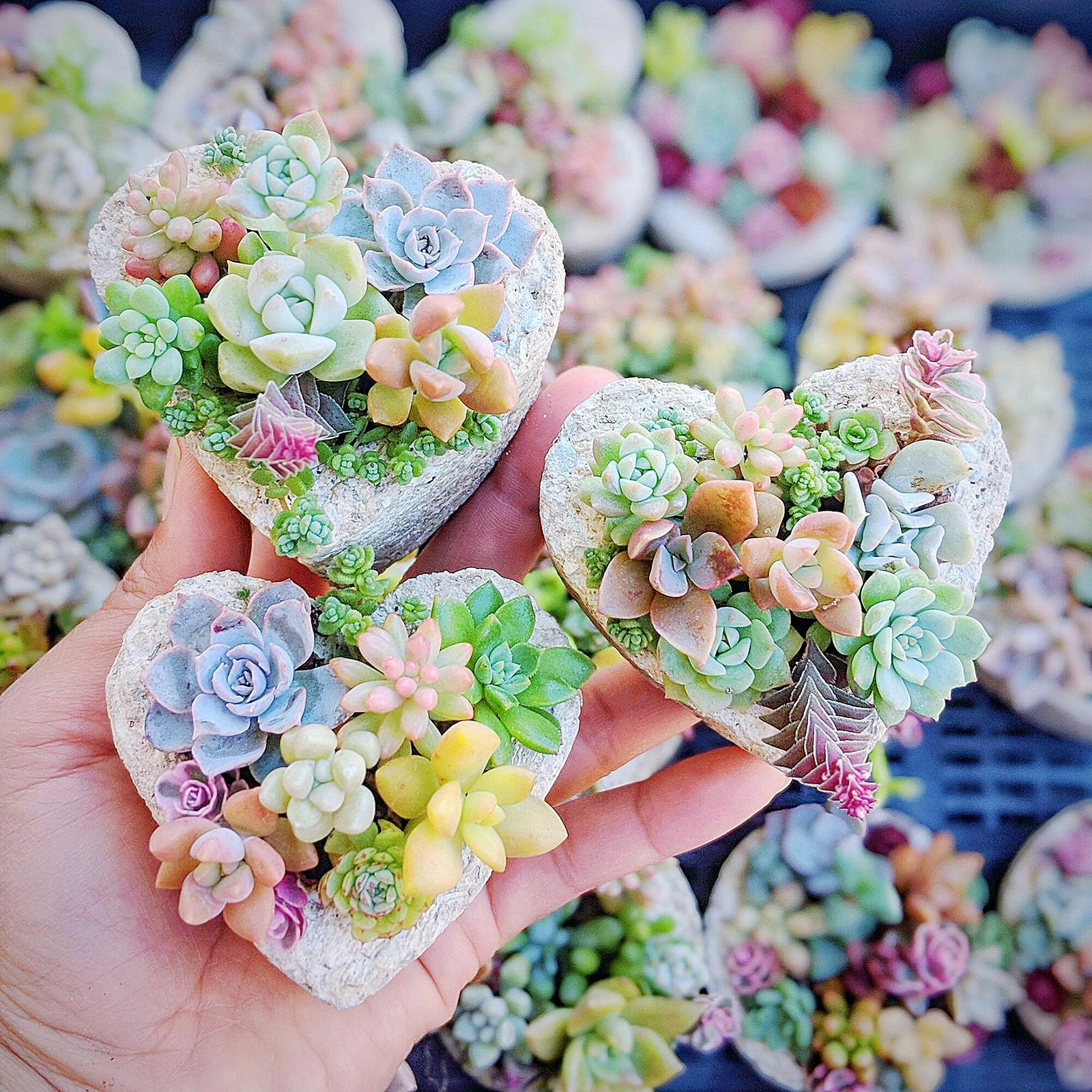 Mini succulent arrangements