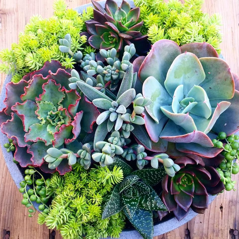 Coastal Eden Succulent Bowl