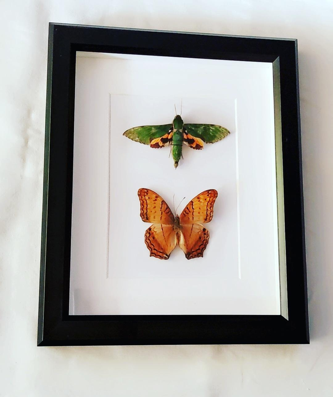 Moth and Butterfly Specimens