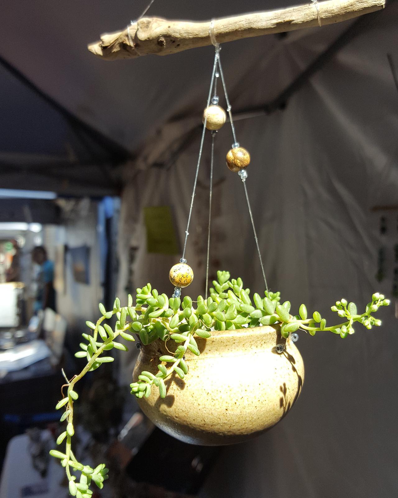 Mobile Succulents