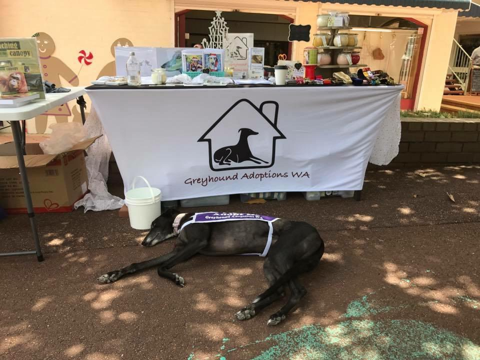 Greyhound Adoptions WA Stall 3