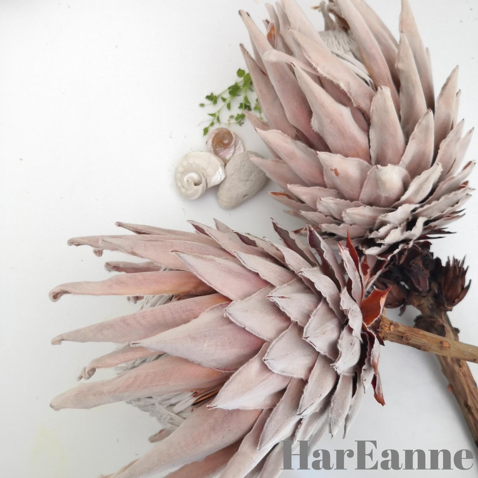 HarEanne
