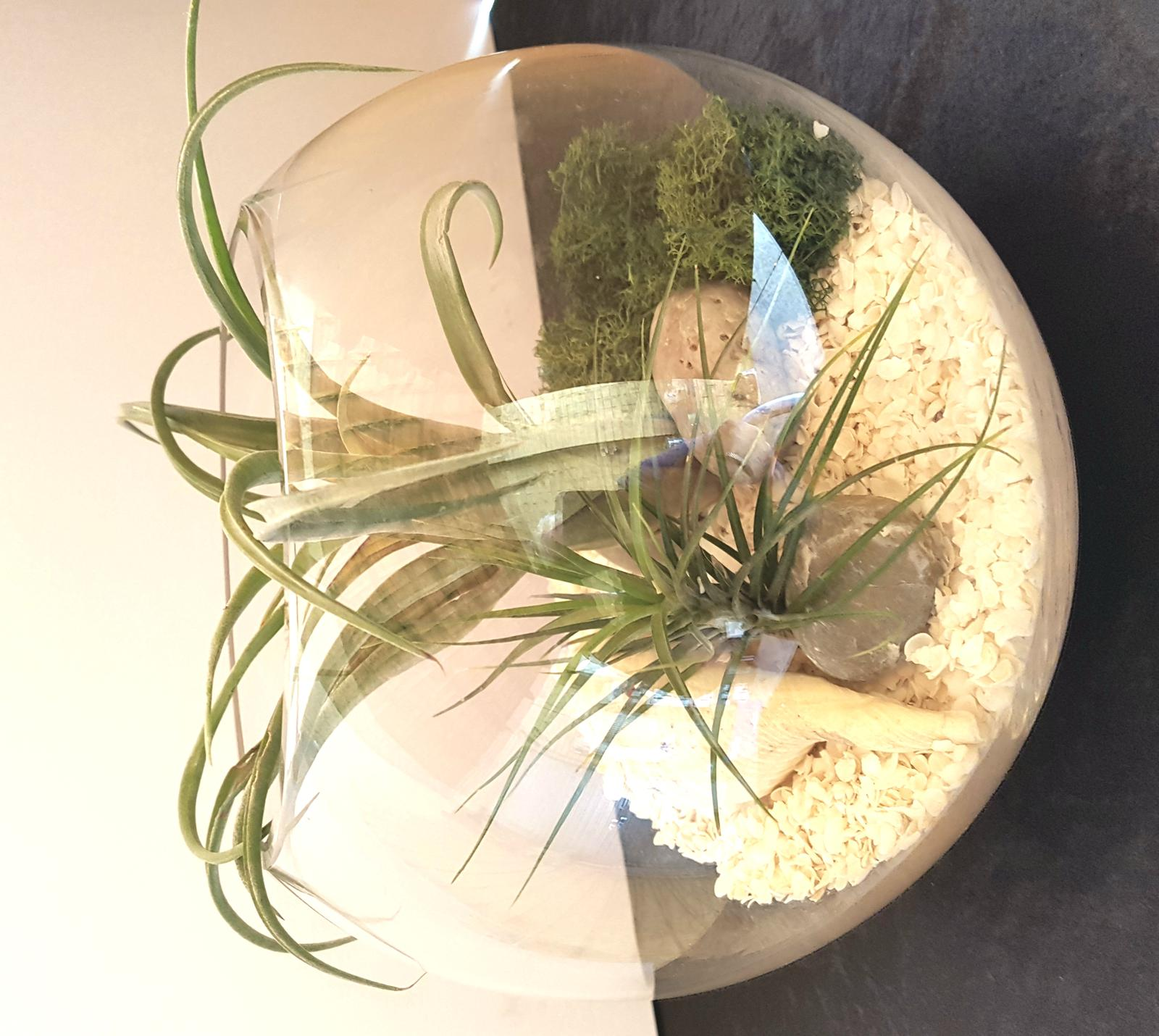 Air plants in terrarium