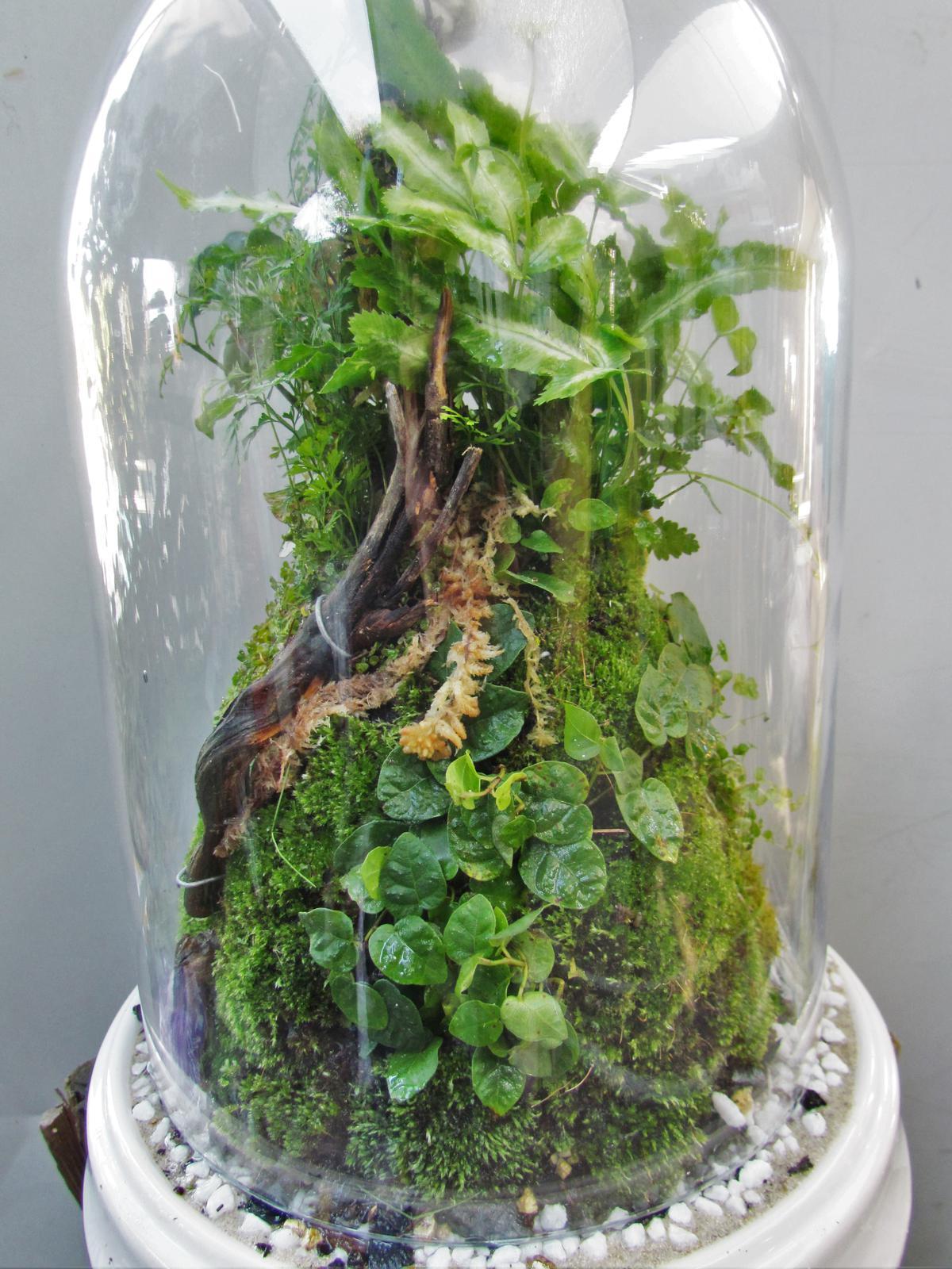 Rainforest dome terrarium