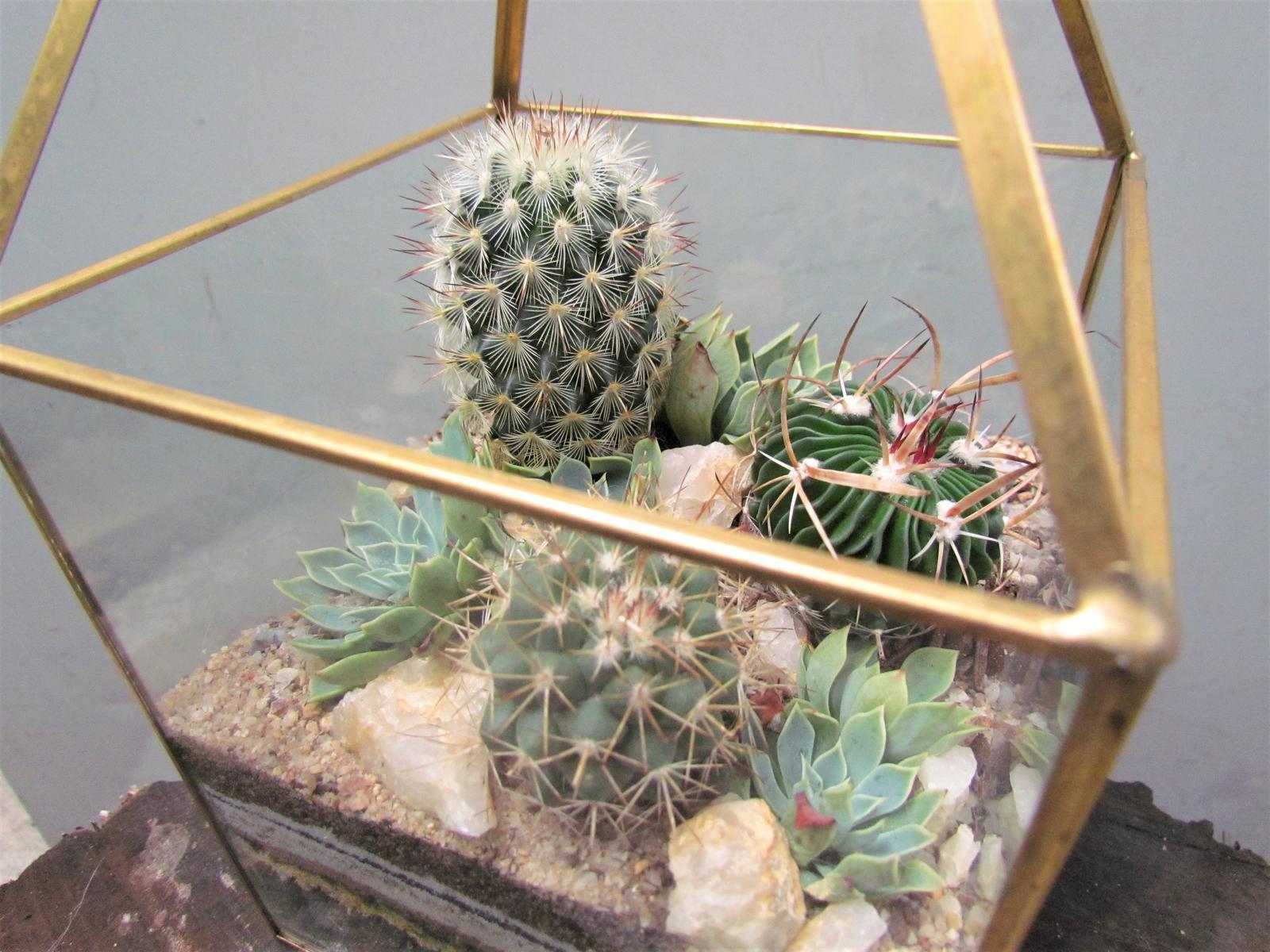 Succulent desert terrarium