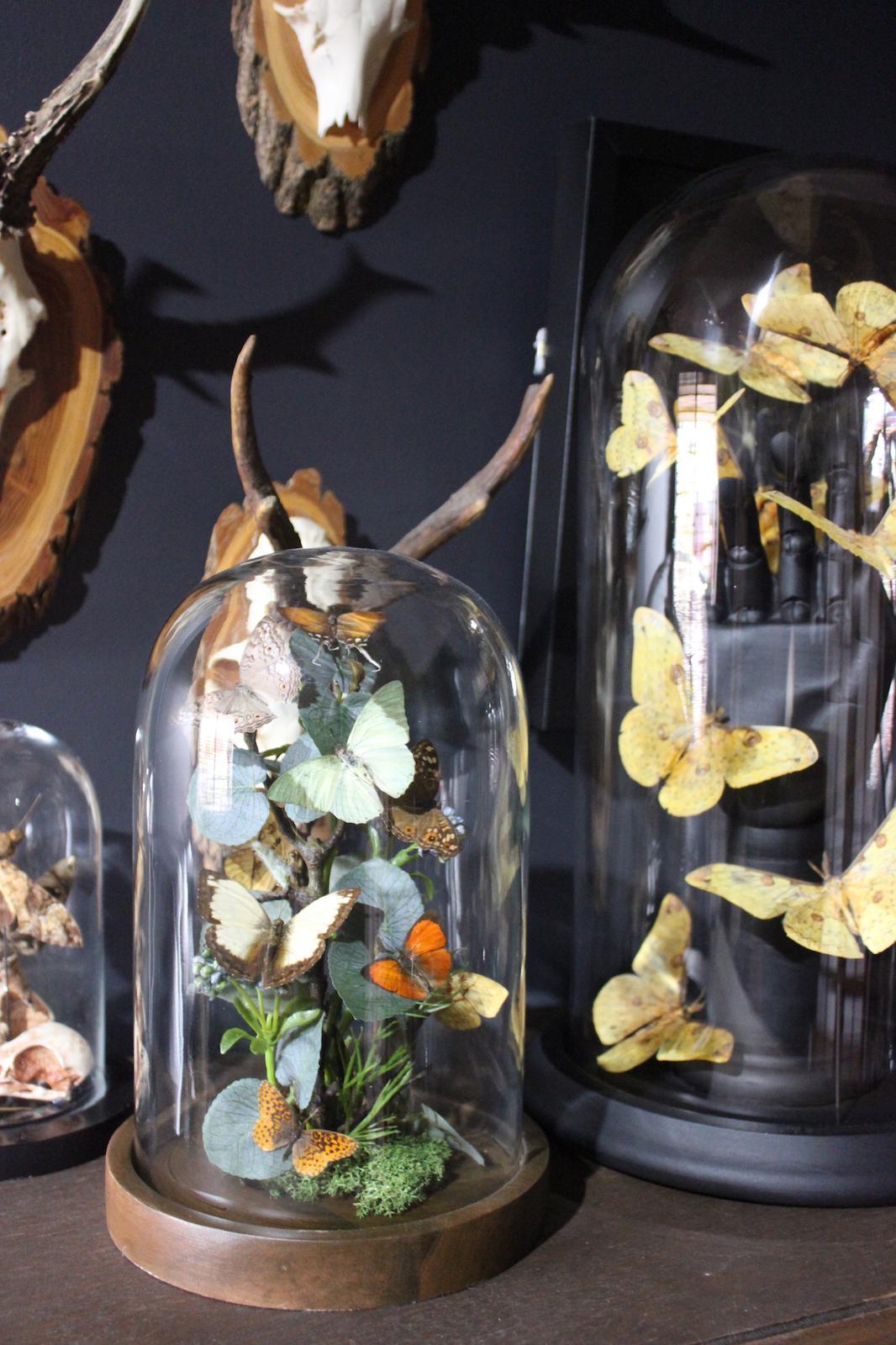 """Glass dome display """"Freya"""" and """"Lilith"""""""