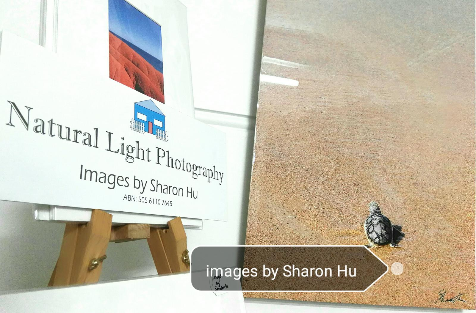 Natural Light Photography by Sharon Hu