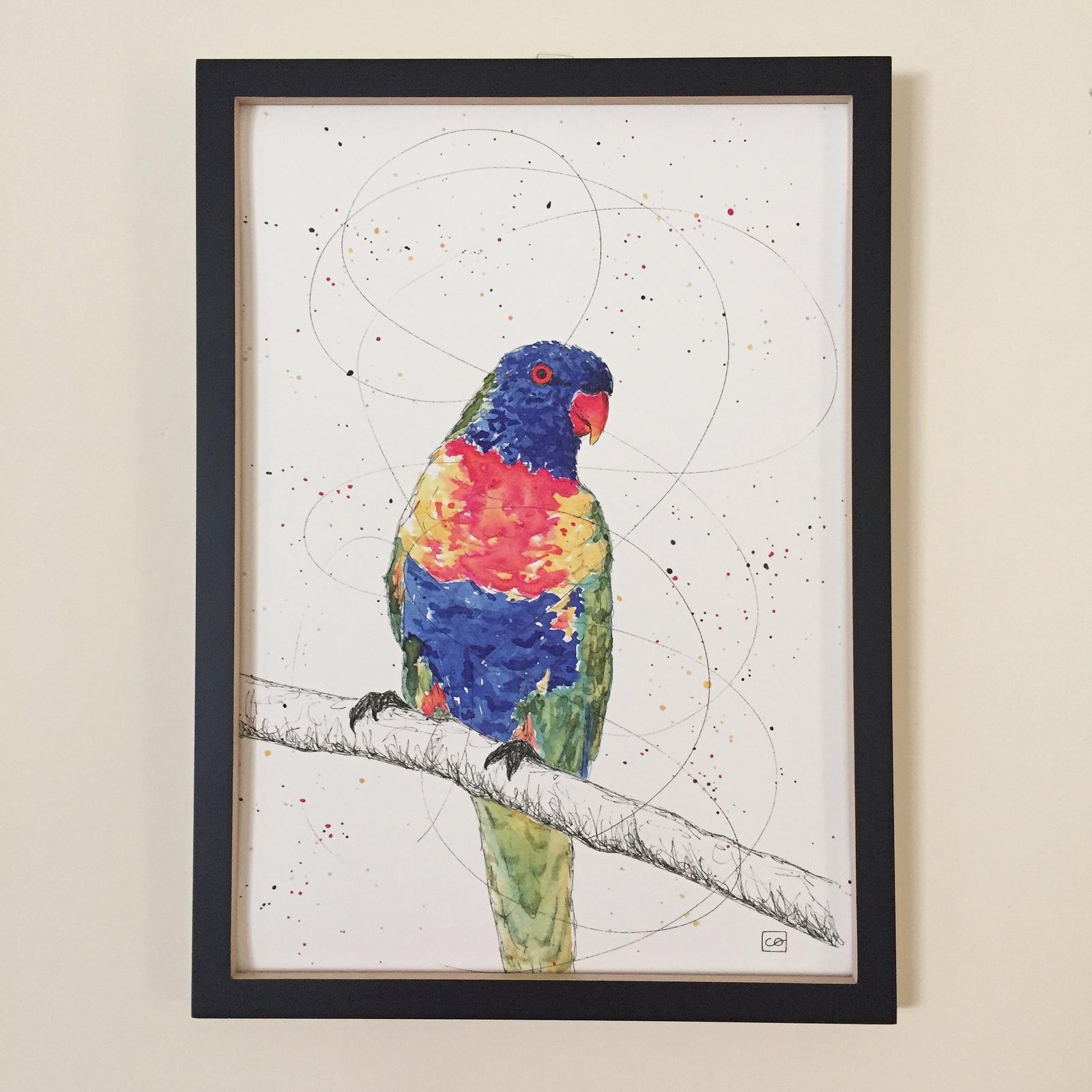 Larry, Rainbow Lorikeet • A3 print