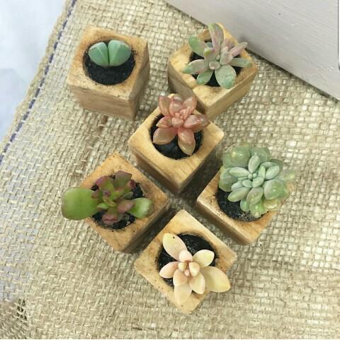 Mini wooden planters