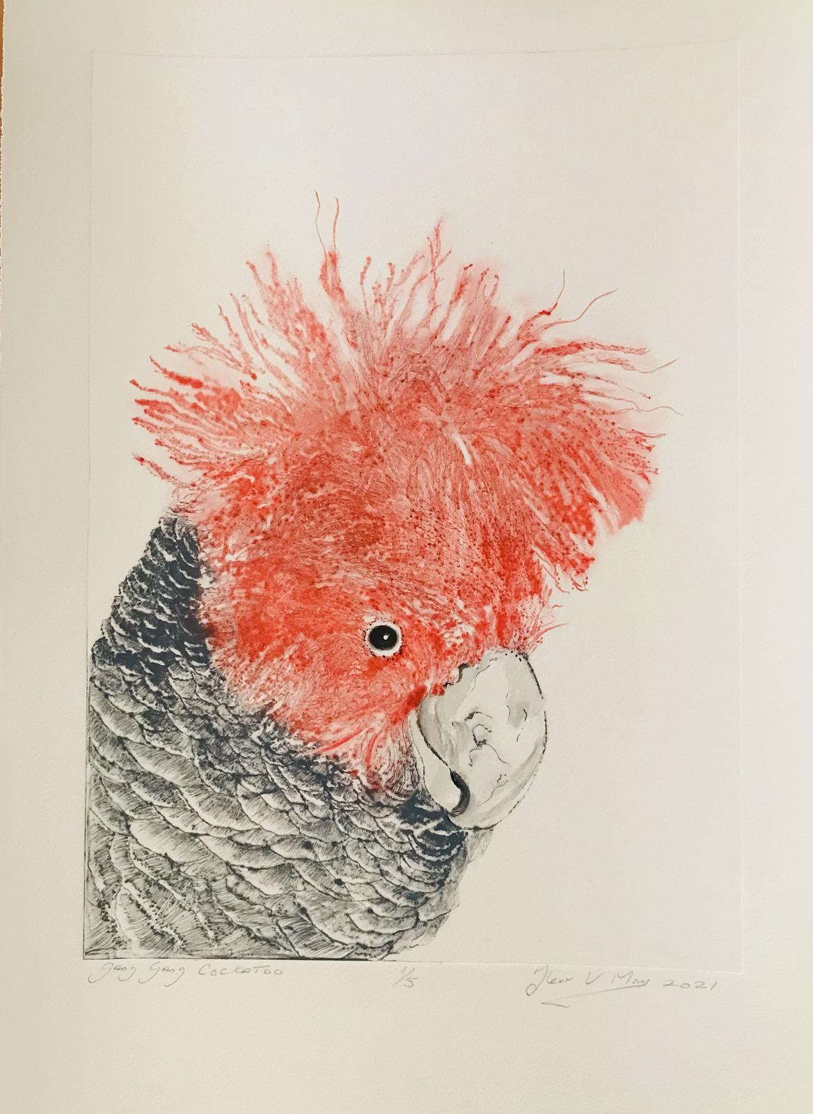 Gang Gang Cockatoo. Dry Point hand pulled limited Edition print.