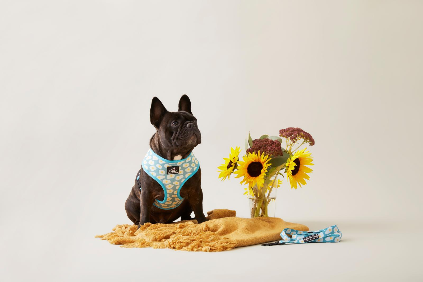 Paws Pet Wear Sunny Side Up Harness