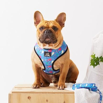 Paws Pet Wear Escape Reality Harness