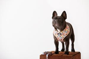 Paws Pet Wear