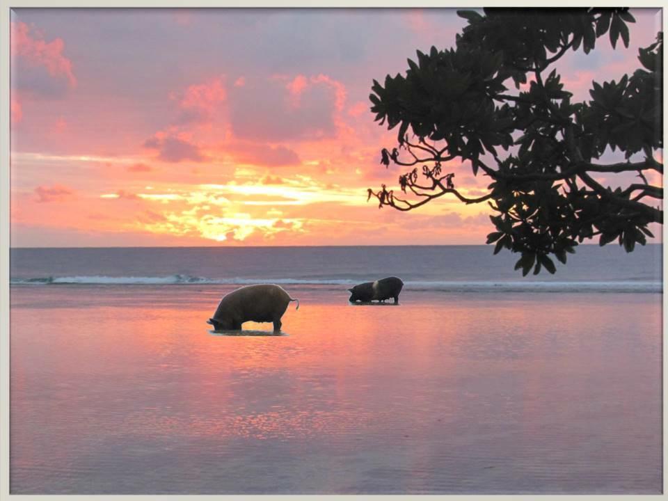 Tongan sunset