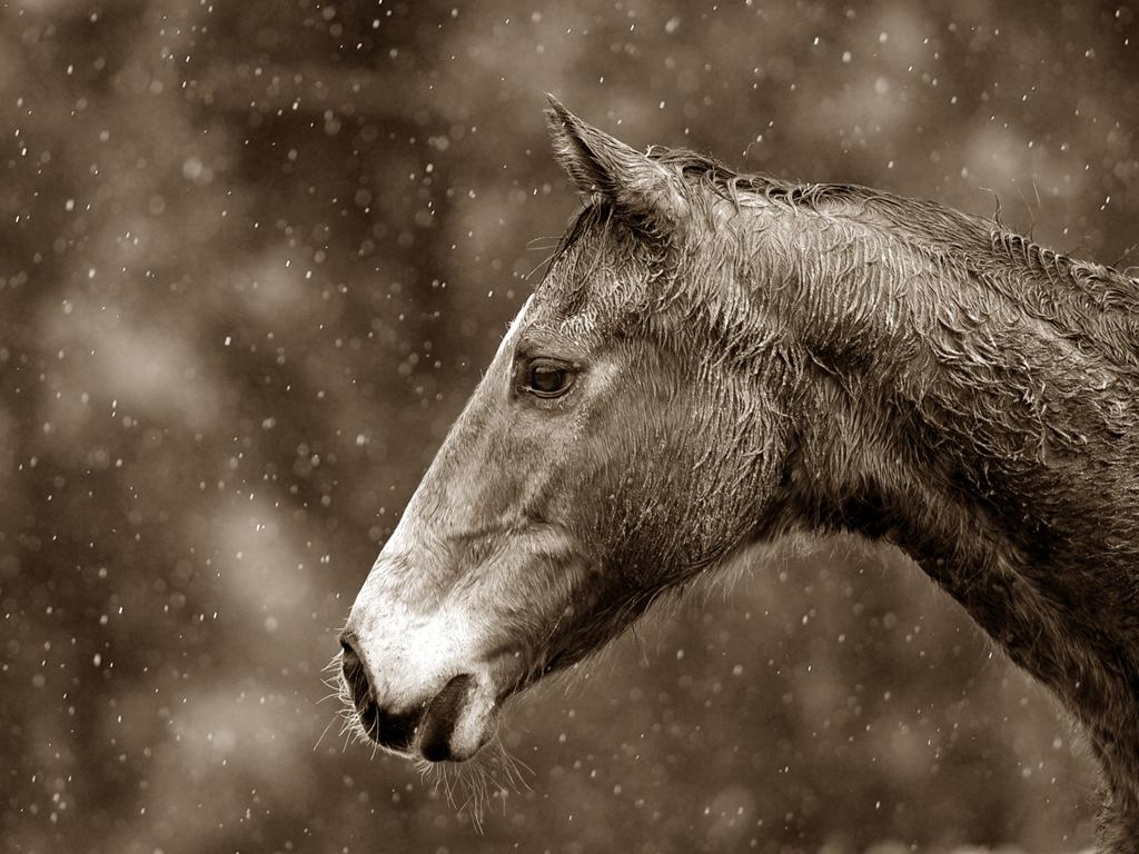 We photograph horses too!