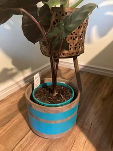 The Flowering Pot