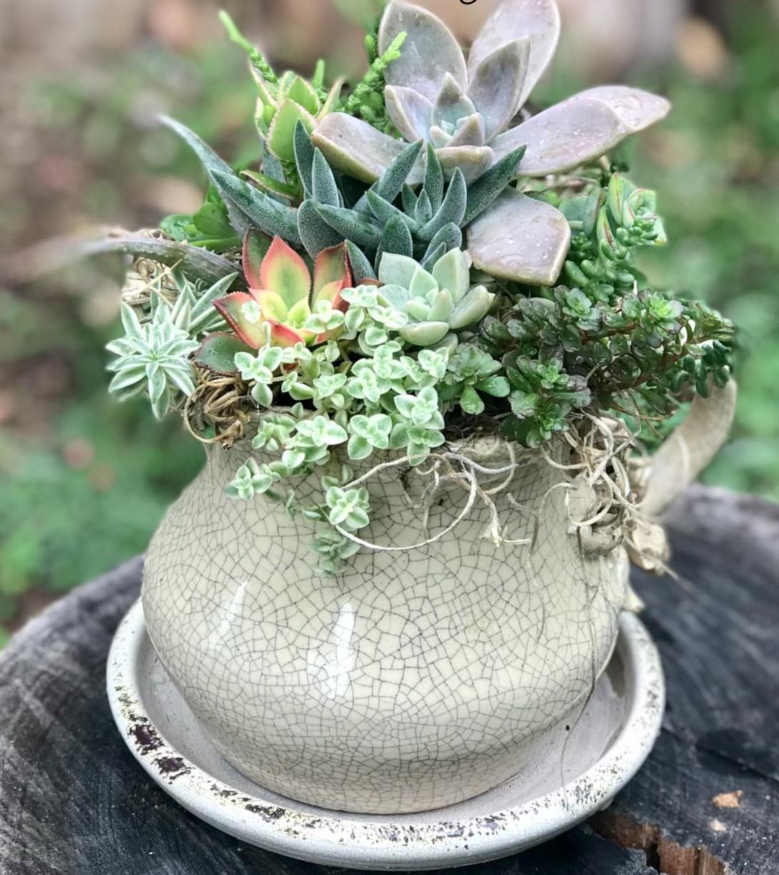 Re purposed Ceramic Jug with succulents