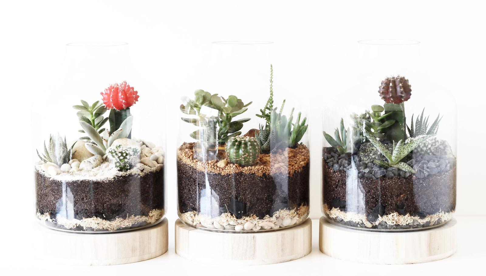 Large terrarium designs