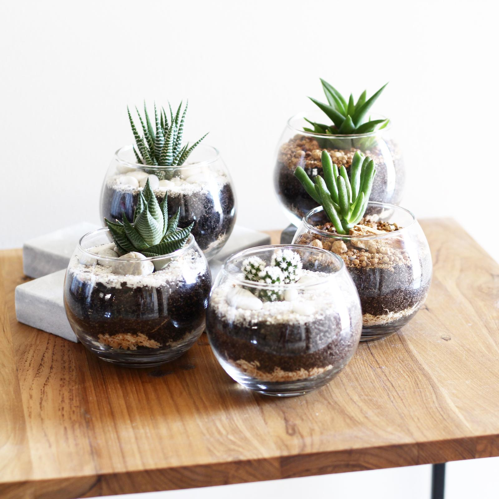 Small terrarium designs