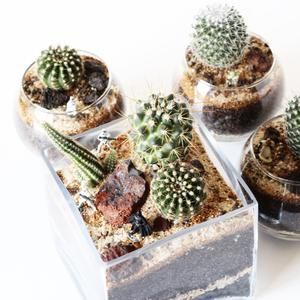 Tiny Botanics Co.