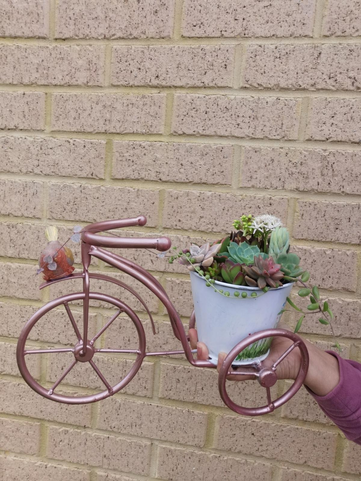 bike planter with succulent
