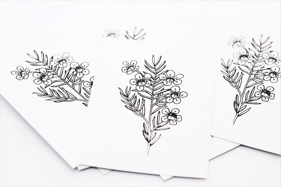 A6 Print - Geraldton Wax